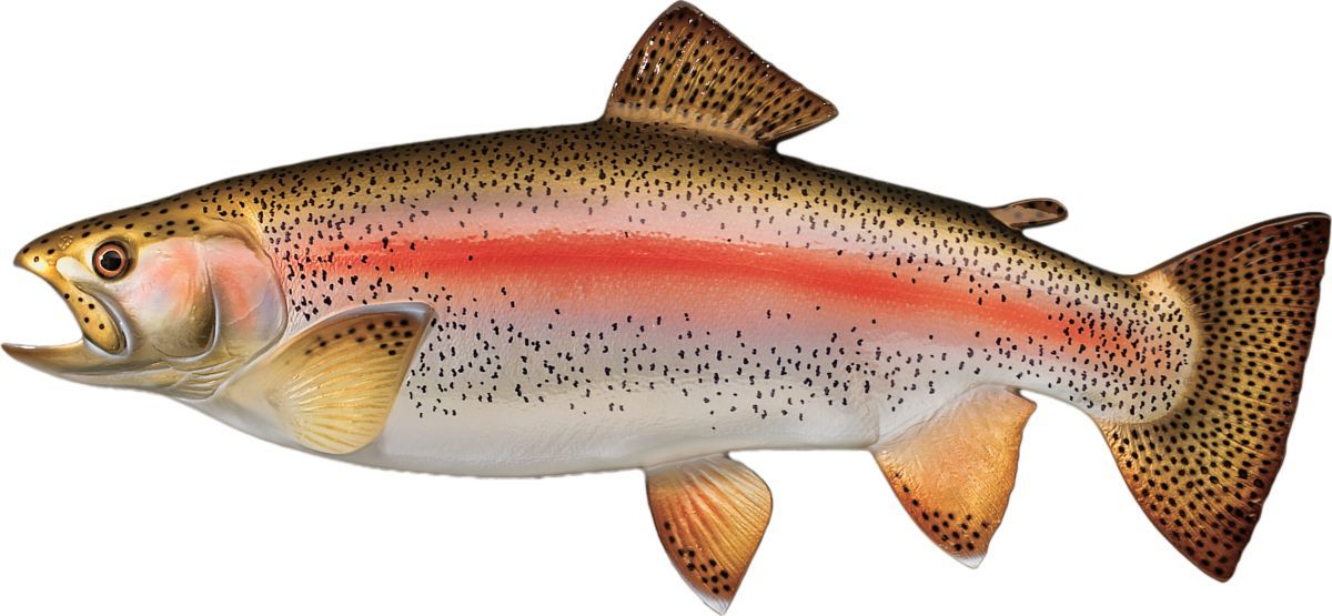 Cabela's Freshwater Fish Mount Replica – Small Rainbow Trout