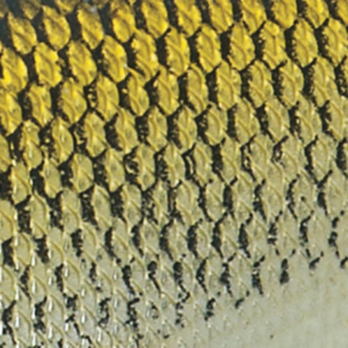 Livetarget® Golden Shiner Rattlebait