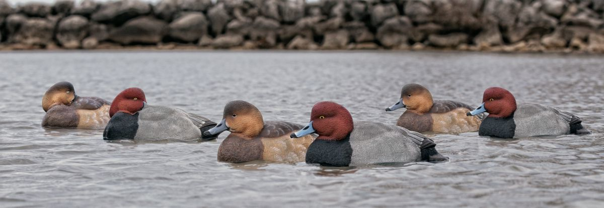 Avian-X Topflight Redhead Duck Decoys – Six-Pack