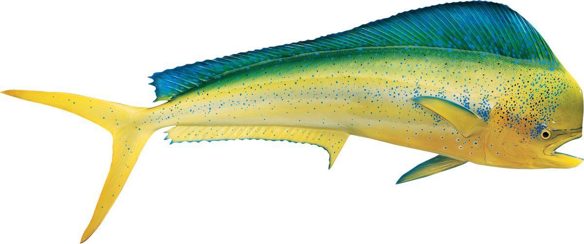 Cabela's Fish Mount Saltwater Replica – Dolphin/Dorado