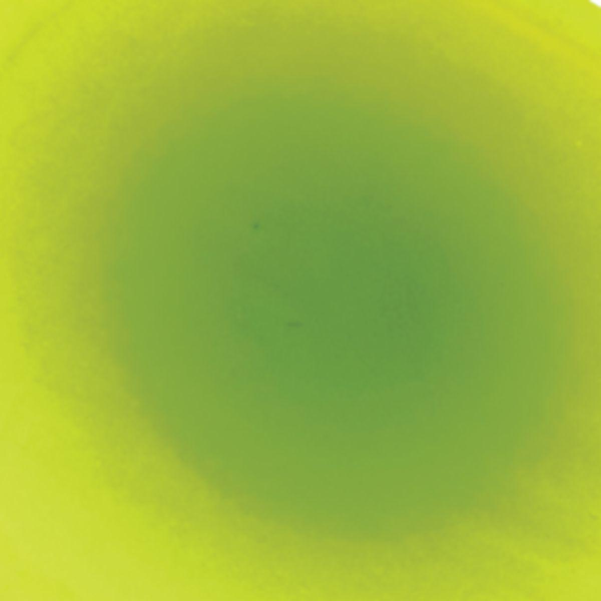 Yakima Bait Flash Glo® UV Squid Trolling Spinner