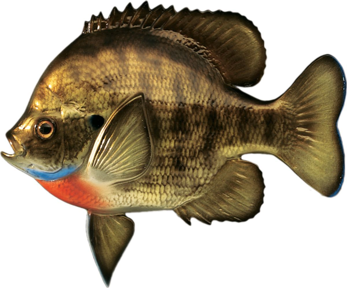 Cabela's Freshwater Fish Mount Replica – Bluegill