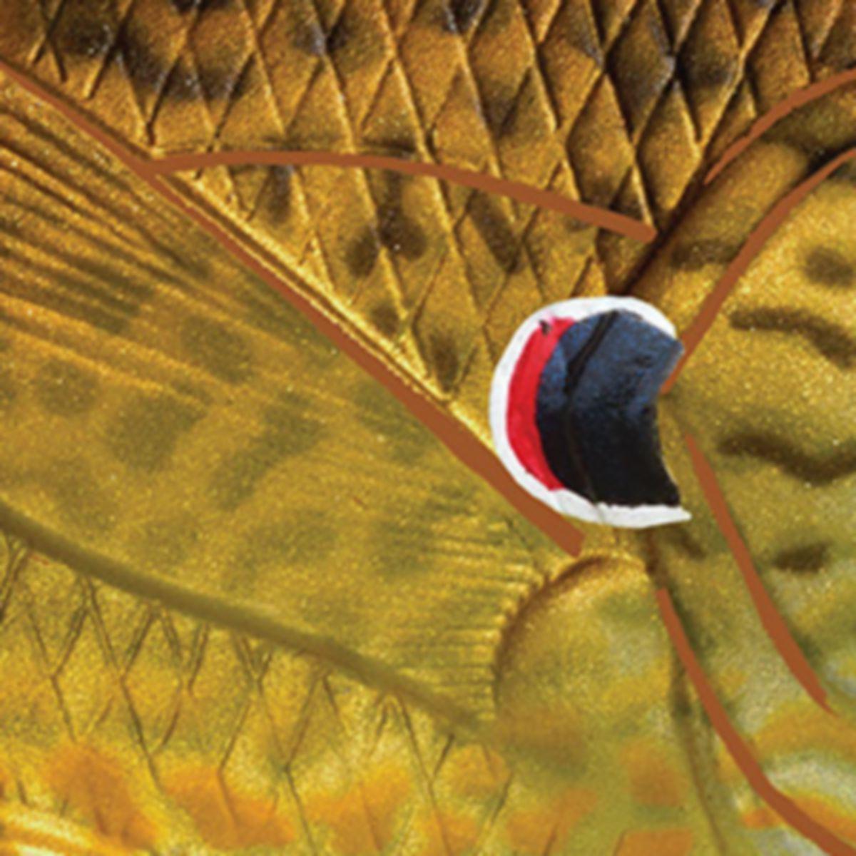 Livetarget® Sunfish Hollow Body
