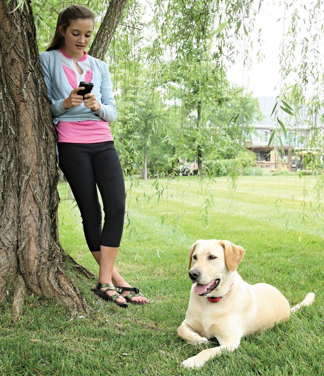 PetSafe® Stay+Play Stubborn Dog Wireless Receiver Collar