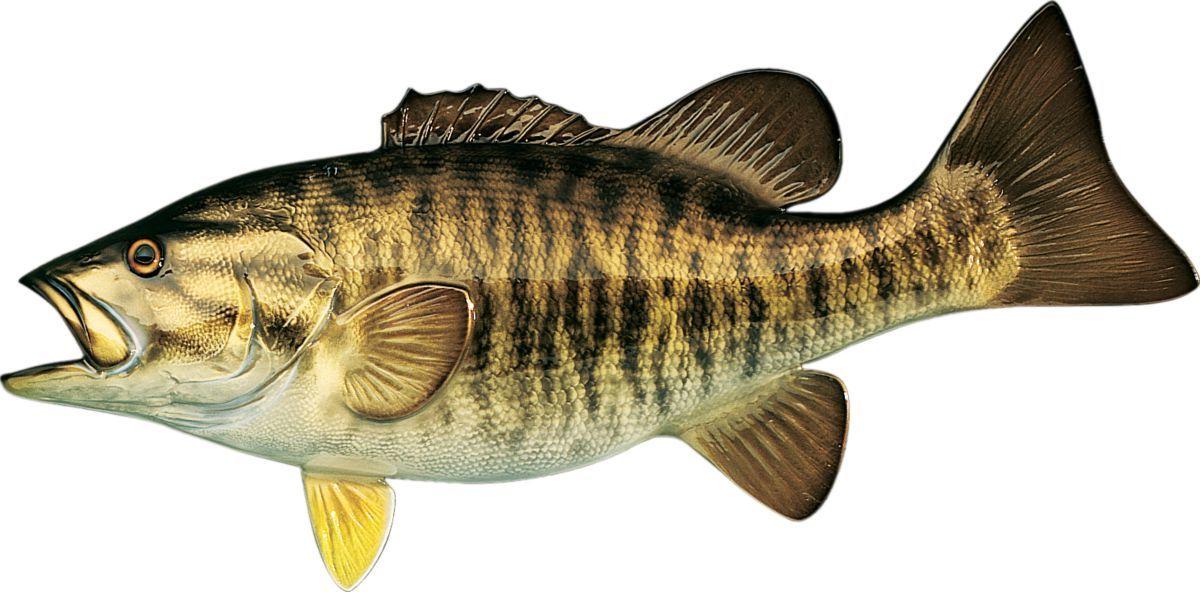 Cabela's Freshwater Fish Mount Replica – Smallmouth Bass
