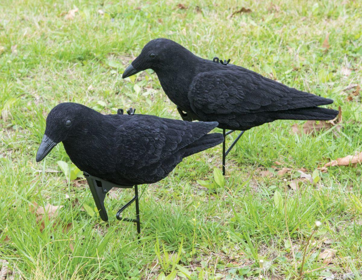 Cabela's Flocked Crow Decoy