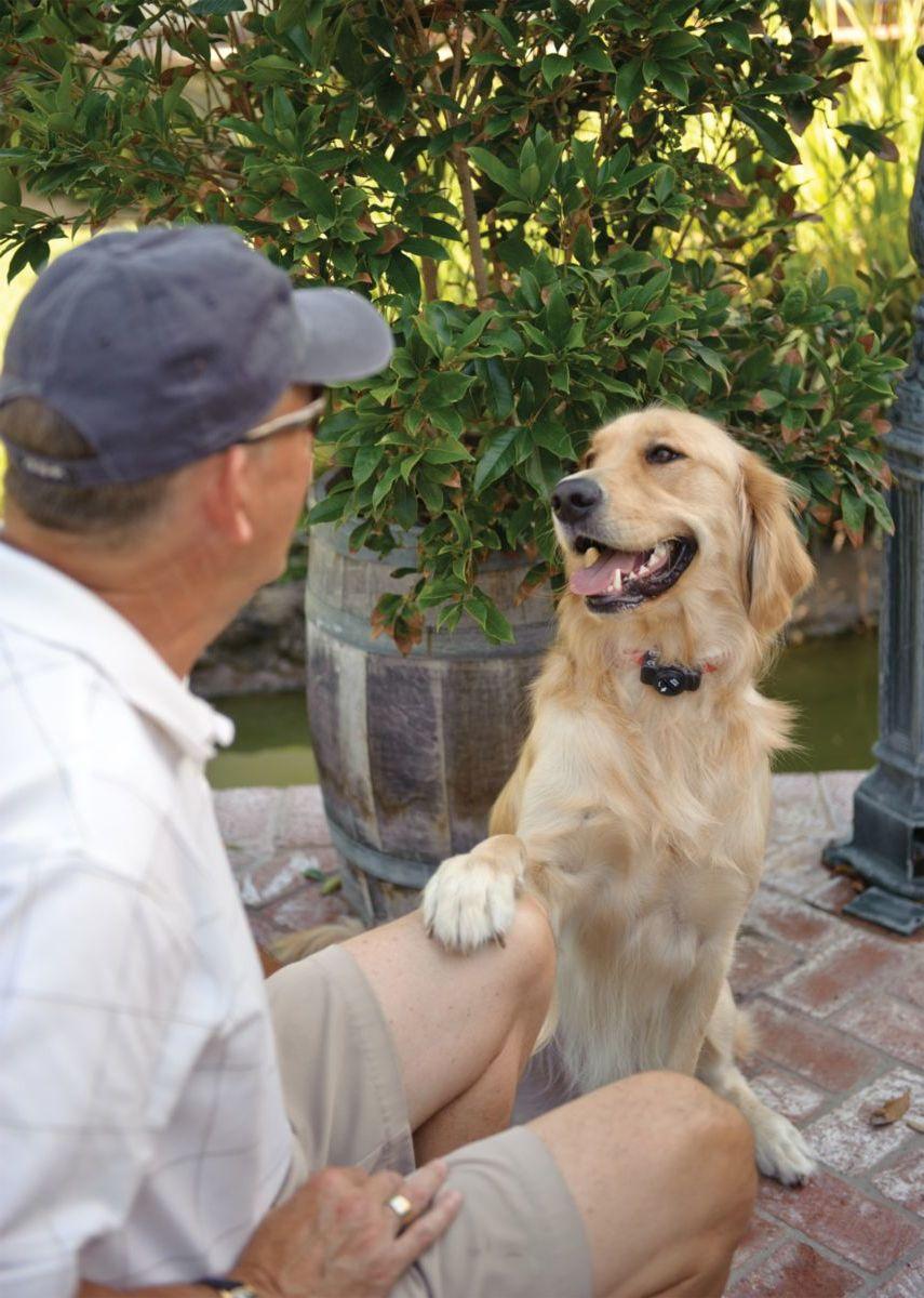 PetSafe® Premium Basic In-Ground Fence™