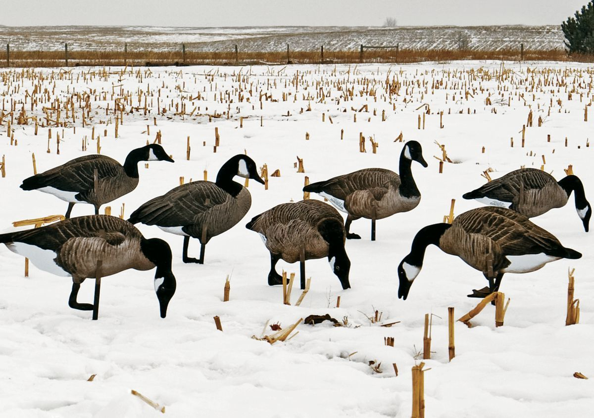 Real-Geese Pro-Series II 3-D Silhouette Canada Goose Decoys