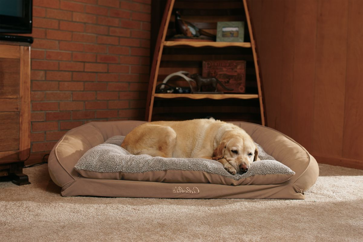 Cabela's Orthopedic Comfort Lounge Dog Bed