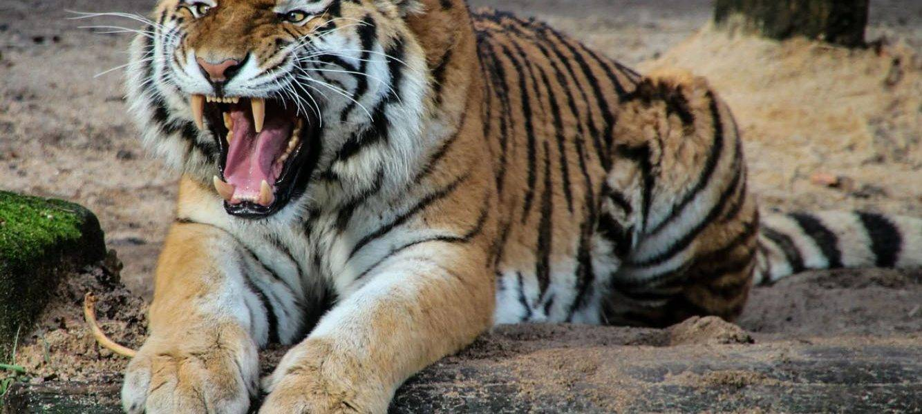 Aggressiveness of Wild Animals Toward Humans